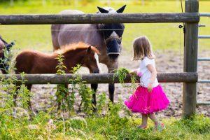 Mädchen füttert Pferde auf der Koppel