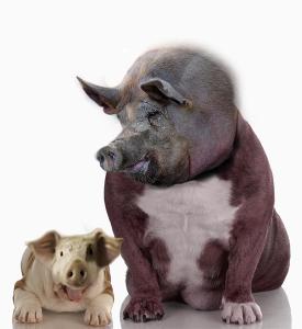 Ferkelwelpe und Schweinehund