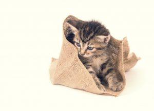 Kleines Kätzchen klettert aus einem braunen Sack.