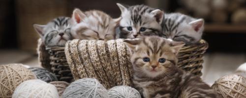 Warum sagen wir eigentlich…? Sprichwörter über Katzen
