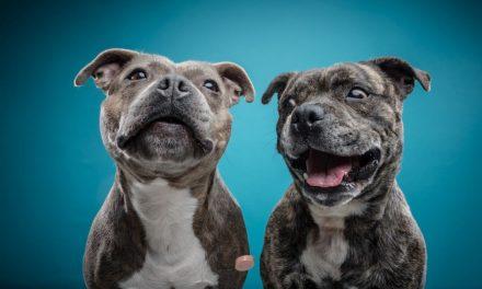 Sprichwörter über Hunde – Warum sagen wir eigentlich…?