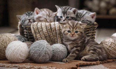 Sprichwörter über Katzen – Warum sagen wir eigentlich…?