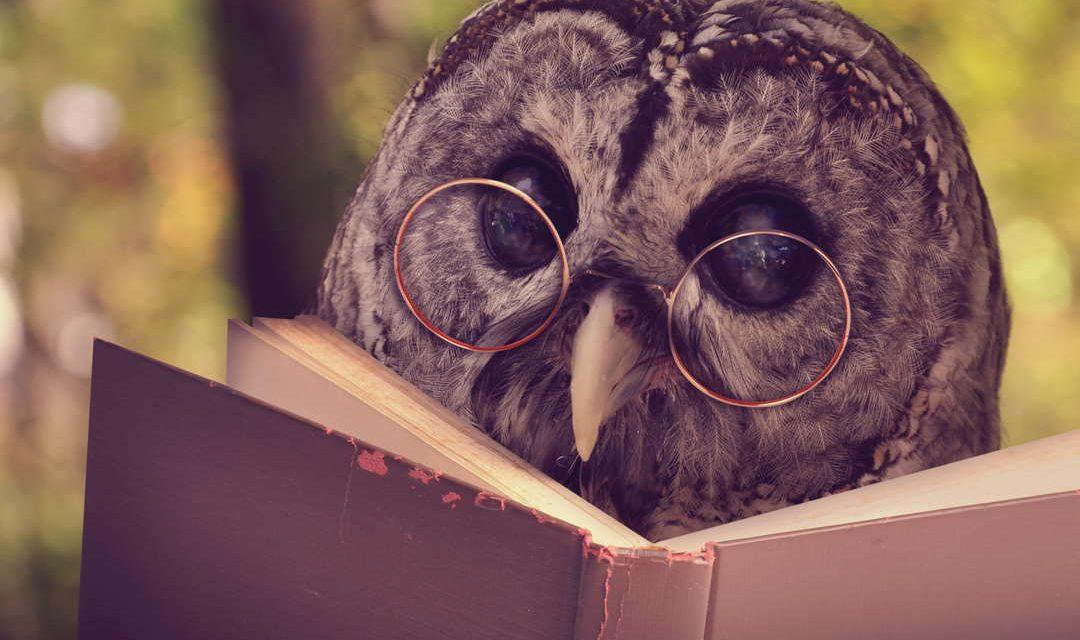 Sprichwörter über Tiere – Warum sagen wir eigentlich…?