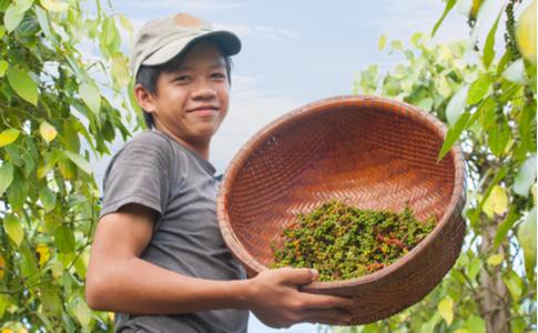 Auch in Vietnam wächst der Pfeffer
