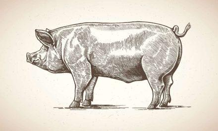 Sprichwörter über das Schwein – Warum sagen wir eigentlich…?