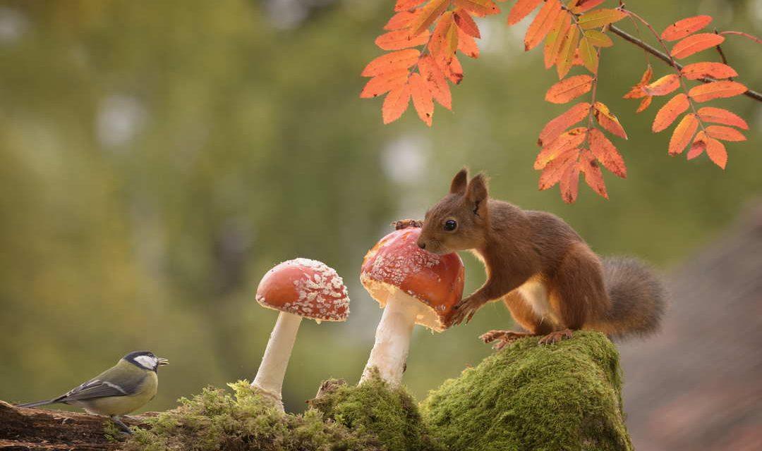 Sprichwörter über den Pilz – Warum sagen wir eigentlich…?