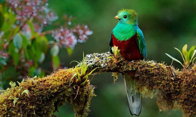 Sprichwörter über Vögel – Warum sagen wir eigentlich…?
