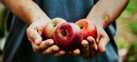 Sprichwörter über den Apfel – Warum sagen wir eigentlich…?