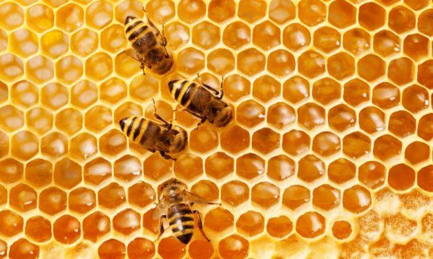 Sprichwörter über Honig – Warum sagen wir eigentlich…?